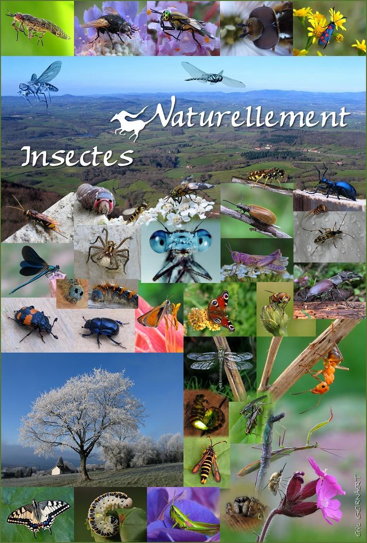 L'exposition : Naturellement Insectes