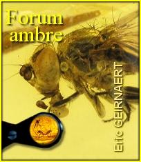 Expertises gratuites au Forum de l'Ambre.